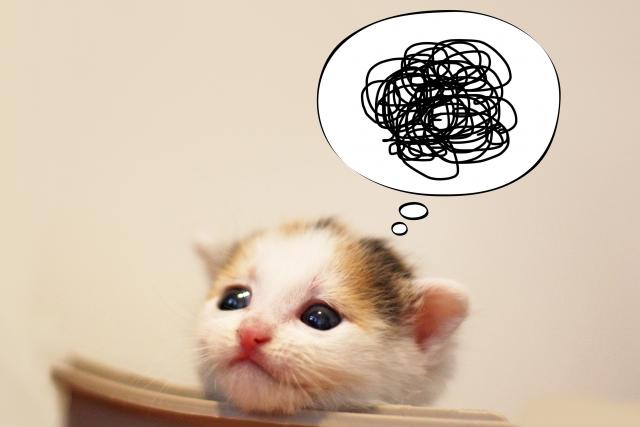 もやもや子猫