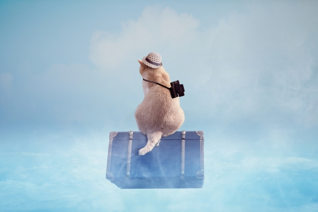 旅行に行く